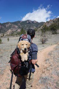 Hundetasker til sport, transport og leg