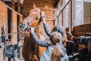 3 tips til at gøre bedre rent i stalden