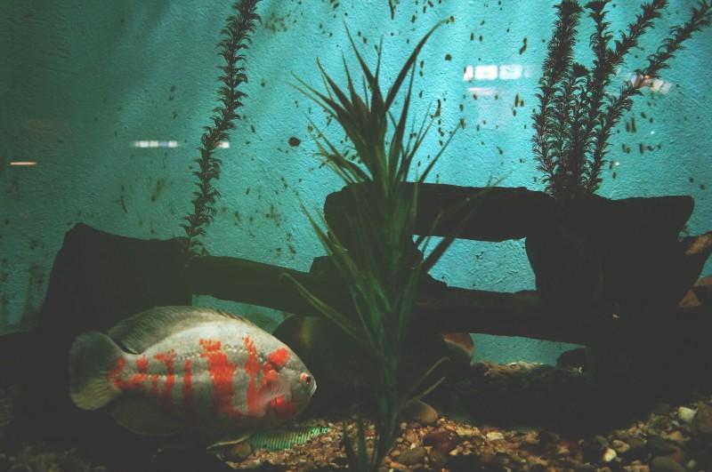 Få et akvarium i dit hjem – køb billige startsæt hos dyrehandleren